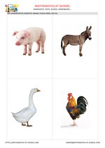 Domestic animal flash cards