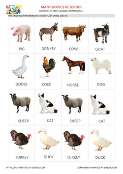 Domestic animal flash cards, A8 size