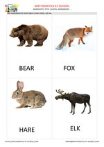 Wild animal flash cards