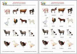 Pre-k domestic animals flash cards, free printable pdf and jpg.